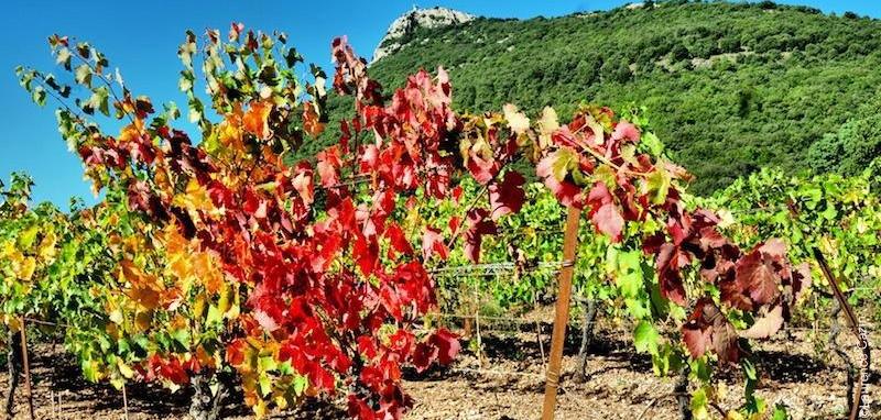 Mas coris cabri res vins bio en languedoc france - Connaitre proprietaire parcelle ...
